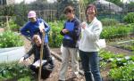 Asia Gardening Workshops Web Directory