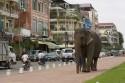 Cambodia Expat jobs